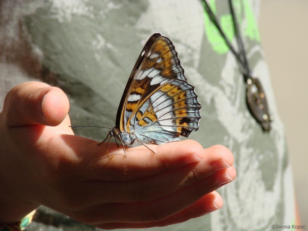 Motyl. Psychoterapia Kraków